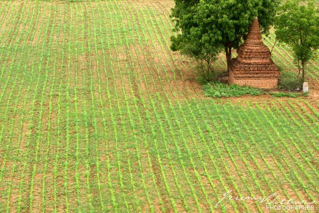 365.289/ Small Temple in Bagan