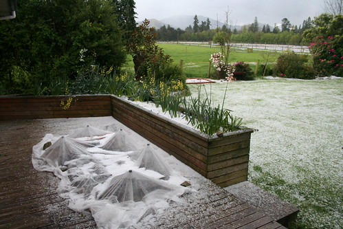 2013-10-13 - Wind damage - Hail - 01