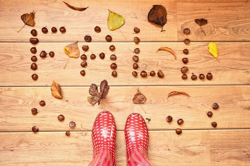 fall  -explored-