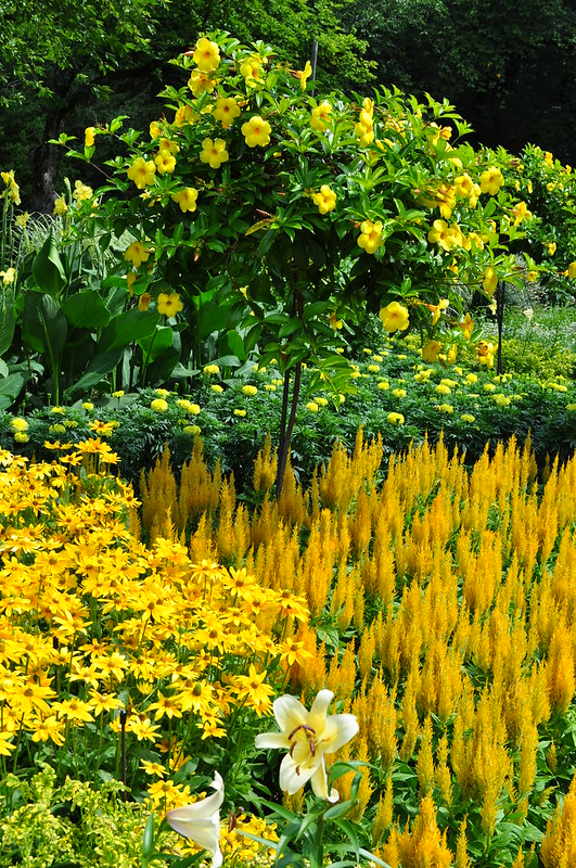 Flower Garden Walk (22)