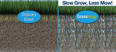 Slow Grow, Less Mow!