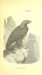 Image taken from page 443 of 'Les Alpes, description pittoresque de la nature et de la faune alpestres, etc. [Translated from the German by Dr. Vouga and Professor Schimper.]'