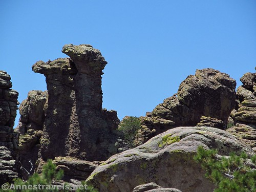 Camels, Heart of Rocks Loop Trail, Chiricahua National Monument, Arizona