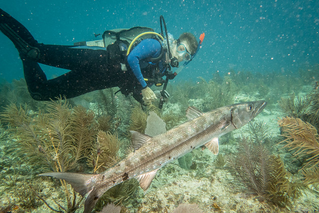 friendly barracuda