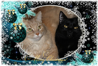 Champaz & Blacky Wishing Their Friends & Contacts ~ A Merry Christmas!! 25/12/2013..