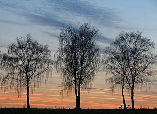 tree sunrise bench day sundown cloudy afterglow