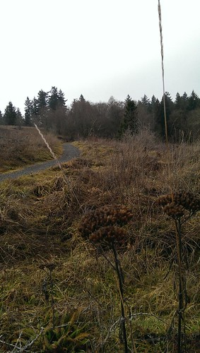Powell Butte Meadow: Goldfinch Trail