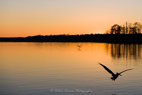 sunset bay alabama reserve pelican research national weeks estuarine