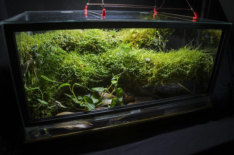 10 Gal. Epiphyte Branch Vivarium - Dendroboard 10 Gallon Vivarium