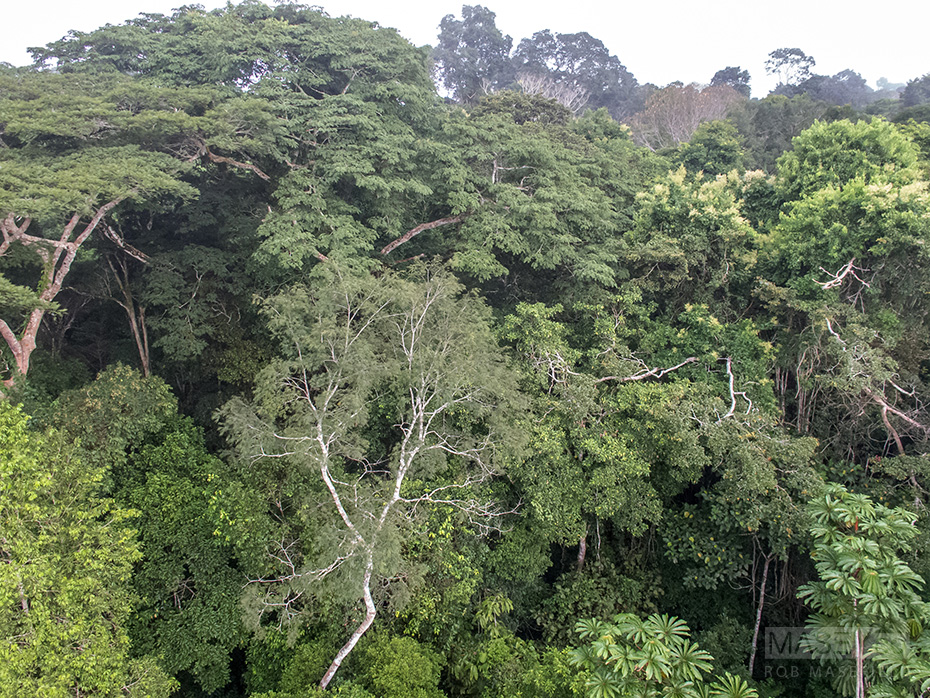 What the Amazon canopy looks like, top side.