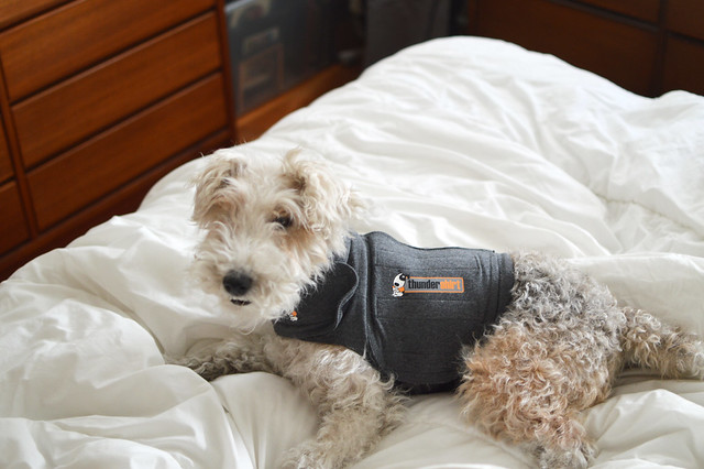 Heart Of Light The Thundershirt