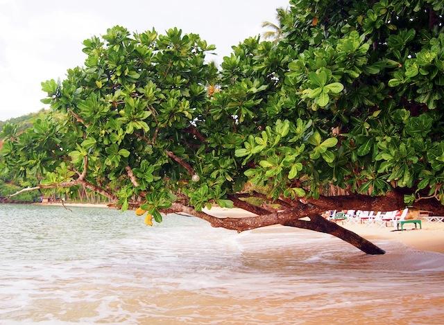 Corong-Corong beach El Nido Las Cabanas tree