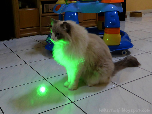 Mikey is Immune to Laser Pointers