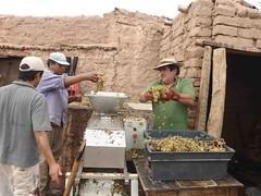 La cultura del vino artesanal en los Valles Calchaquíes