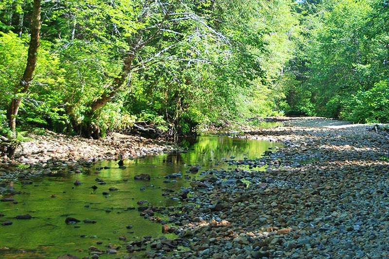 Nahwitti River near Port Hardy, North Vancouver Island, British Columbia, Canada