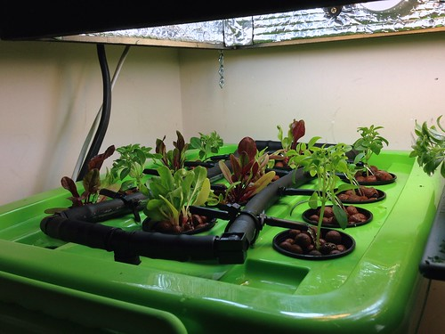 Seedlings Transplanted