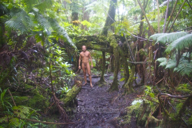 naturist 0003 Ka-hau-a-Le'a tree fern trail, Hawaii, USA