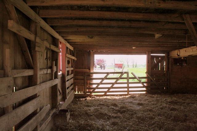 207/365 Inside Heifer Barn