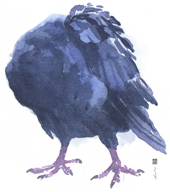 Pigeon_Preening_5_sm