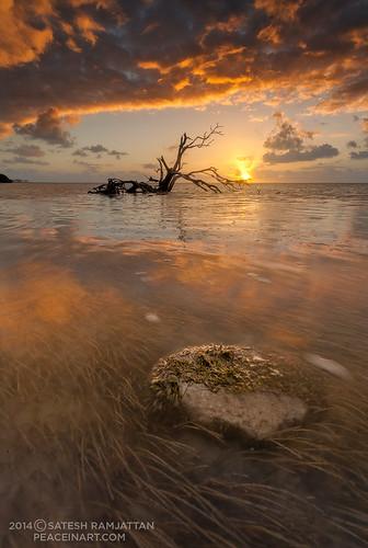 ocean seascape sunrise reflections dawn florida tide low islamorada floridakeys satesh landscapephotography beachsunrise deadtreeonbeach annesbeach peaceinart stormcloudsinislamorada
