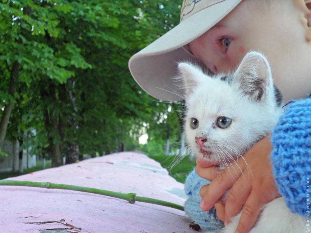 20140617_novik_cat_001