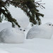 Resting on a bed of snow by annkelliott