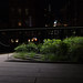 untitled (high line at night)