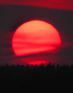 Panasonic DMC-TZ41  - impressive sunset on red -  last moments - # 474