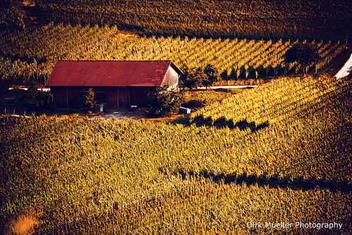 The Hut In The Vineyard by Dirk Mueller Photography