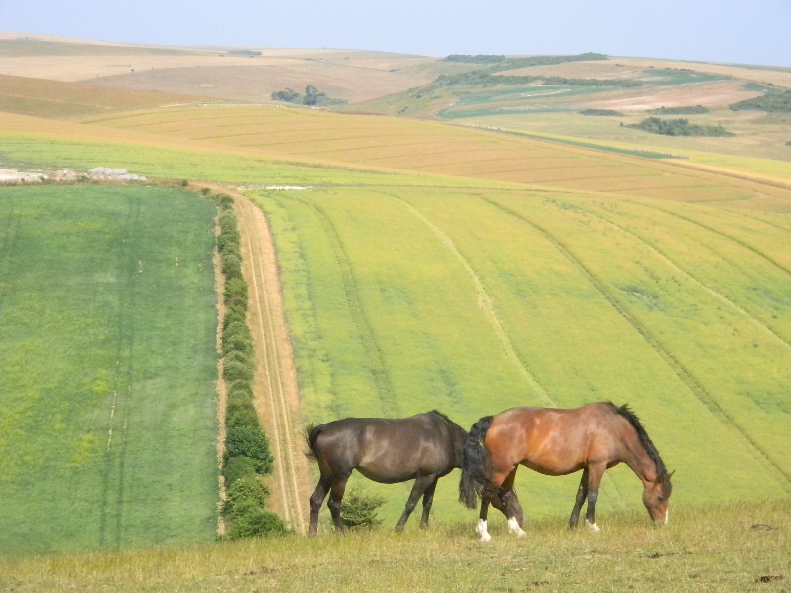 Horses, fields Lewes to Seaford (composite route)
