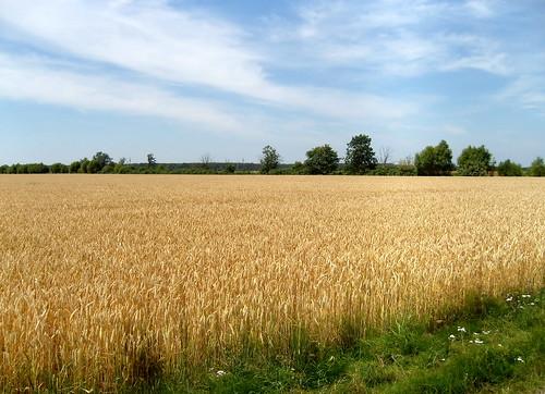 Sommer in der Altmark ...