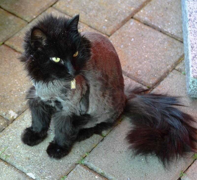 Nera the cat had a haircut