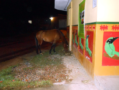 Horse in Guatapé, Colombia