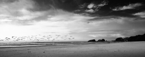 Gulls on Cannon Beach, OR