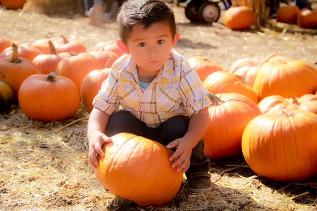Pumpkin_2013-9