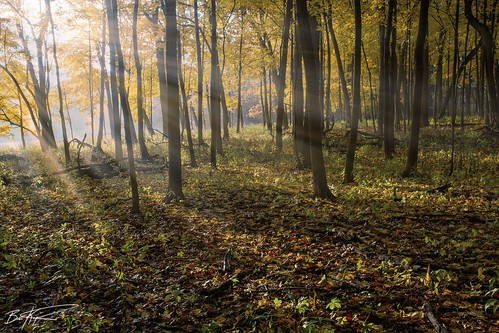 autumn trees fall nature fog forest sunrise landscape illinois woods midwest arboretum rays morton pentaxk5 briankoprowski bkoprowski