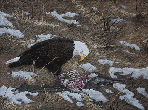 Eagle Feeding by Sid's art