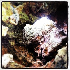 Inside a tree #EppingForest #Trees #Essex #Walks #Walking