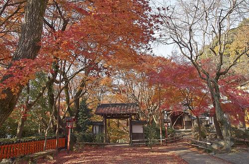 【写真】紅葉 : 妙円寺
