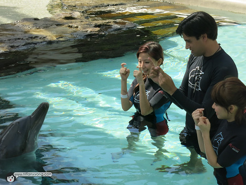 interacting with dolphin