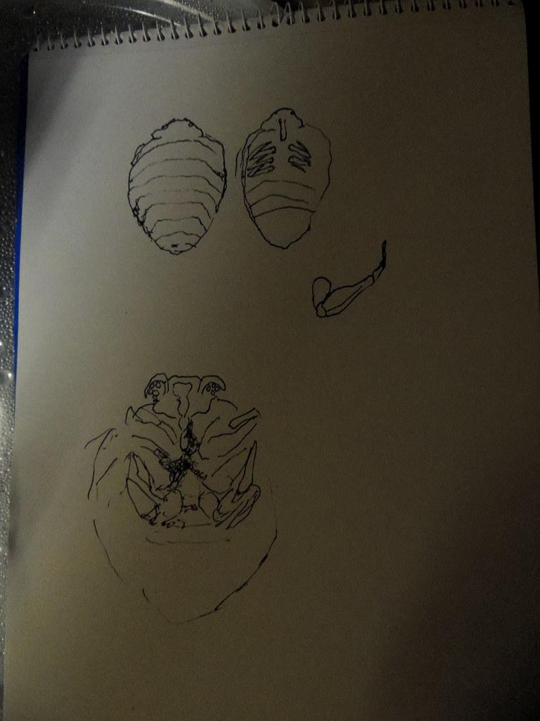 Carving a bedbug