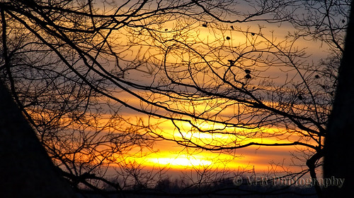 trees winter sunset tree silhouette naked landscape twilight branch tn sundown tennessee bare branches january silhouettes sunsets southern thesouth limbs limb barren clarksville montgomerycounty smithtrahernmansion