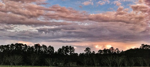 sunset clouds dusk treeline
