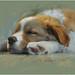 Sleeping Beauty by Alberto Guillen1