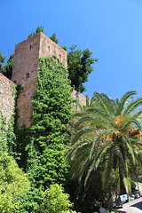 Alcazaba and palms