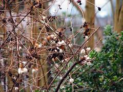 Blätter&Sträucher