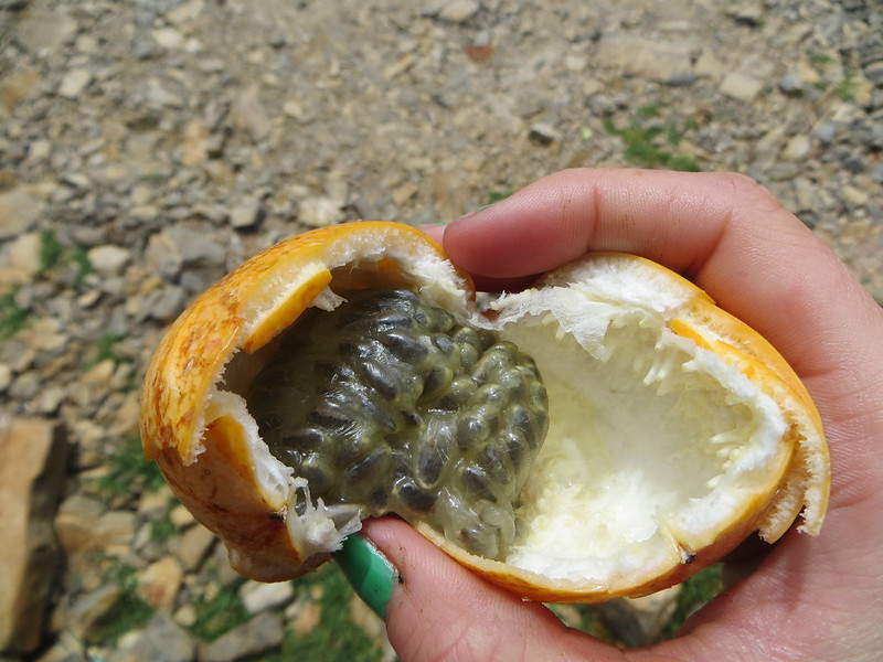 granadilla, love