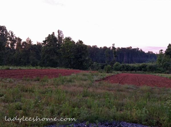 Planting-Buckwheat-01