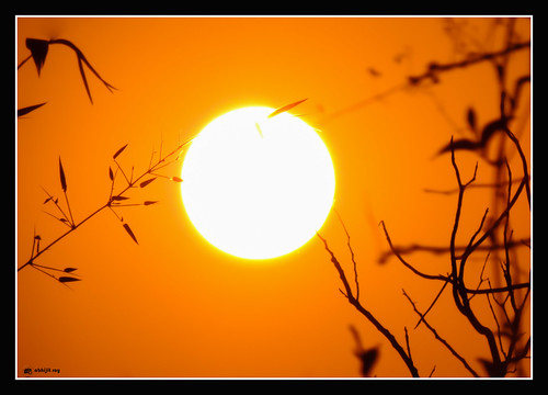 sunset red sun nature silhouette nikoncoolpixp520 tripuraindia