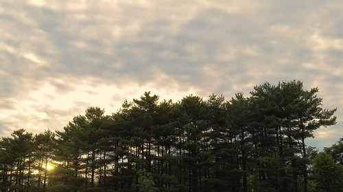 trees light sunset sun green nature clouds canon dark atardecer dawn cloudy pines rays settingsun amateurphotography sx50